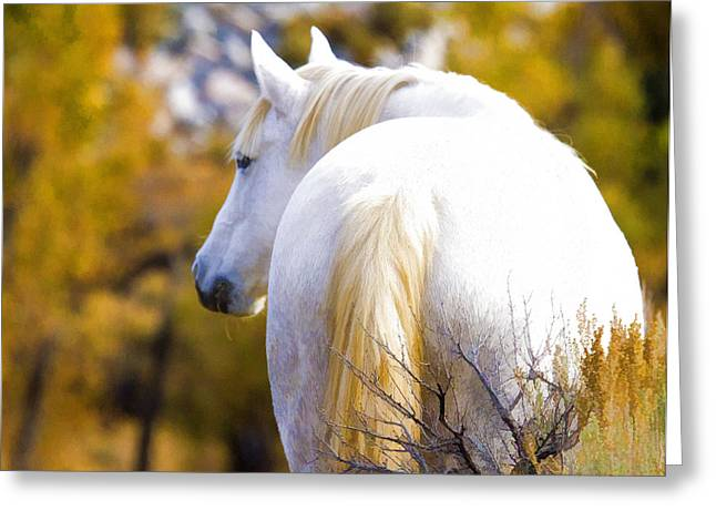 White Mustang Mare Greeting Card