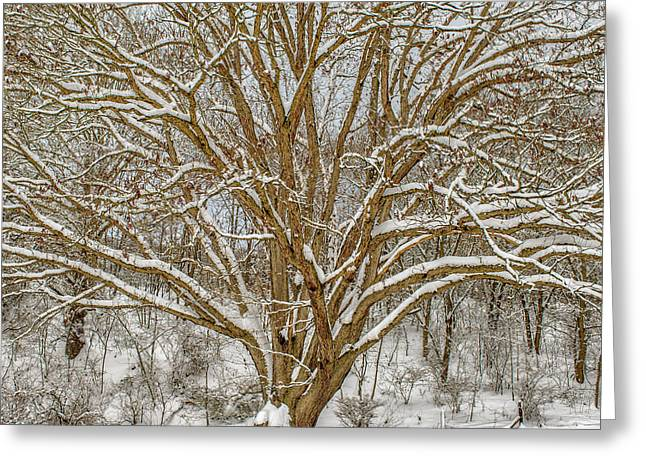 White Oak In Snow Greeting Card