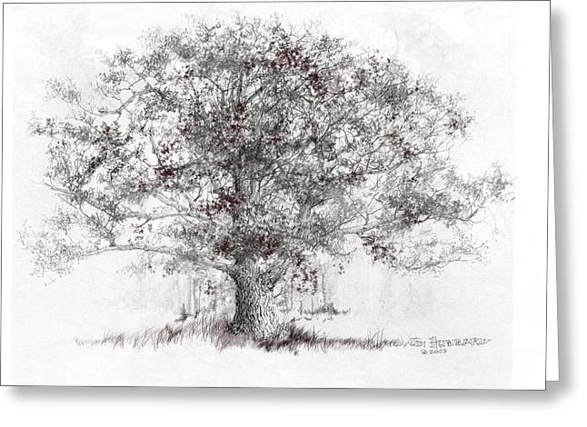 Jim Hubbard Greeting Cards - White Oak Greeting Card by Jim Hubbard