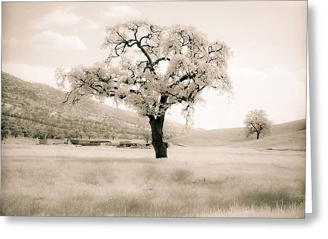 White Oak Greeting Card