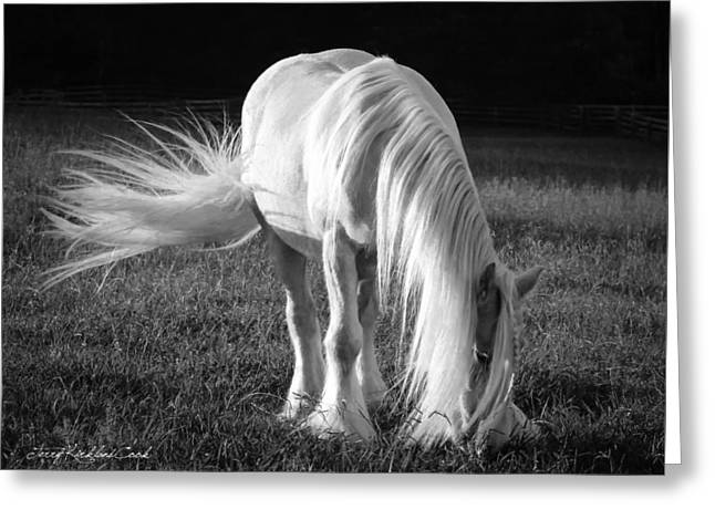 White On Black And White Greeting Card by Terry Kirkland Cook