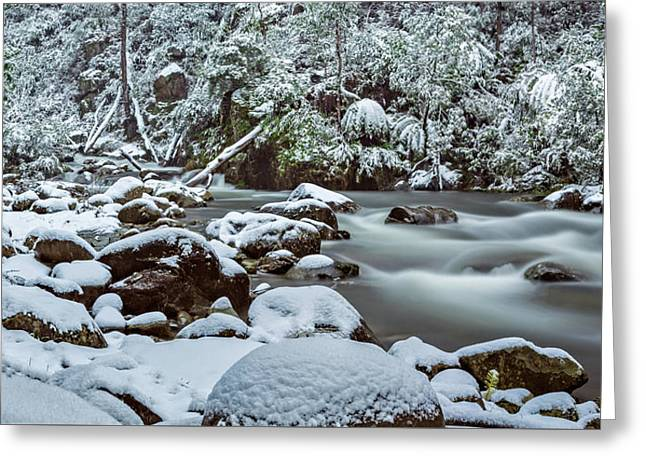 White On Green Greeting Card by Mark Lucey