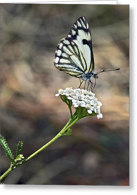 White On White Greeting Card by James Steele