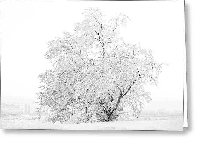 White On White Greeting Card by Marilyn Hunt