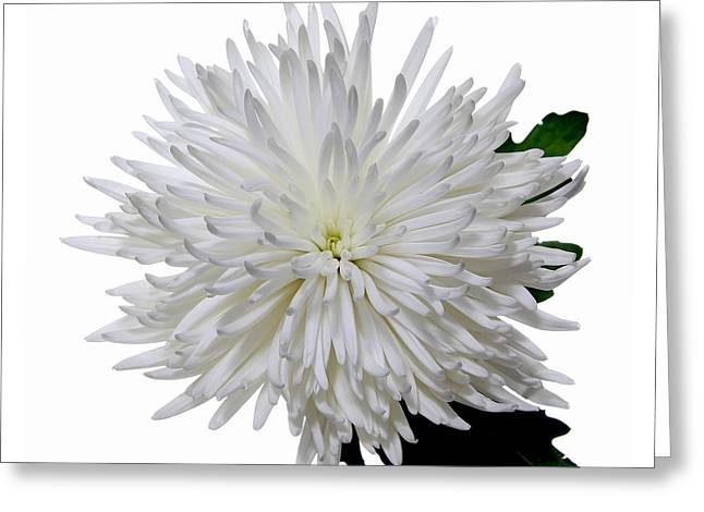 White On White Greeting Card by Peter Dorrell