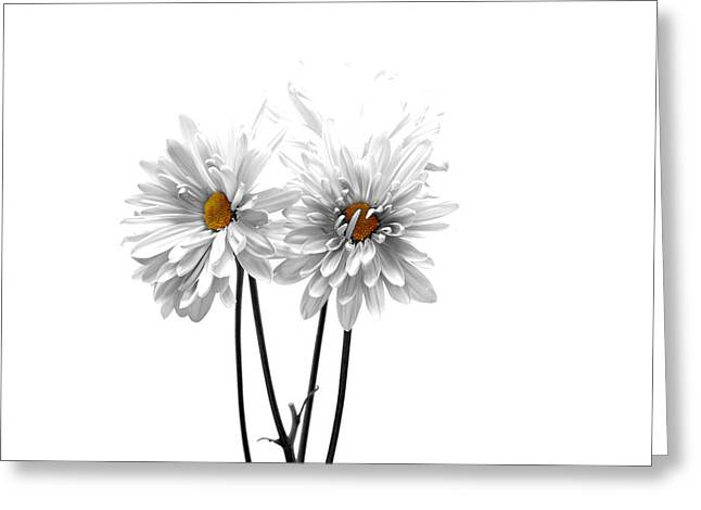 White On White Greeting Card