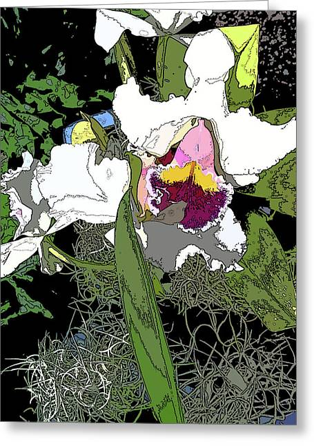 White Orchid Greeting Card by Adina Campbell