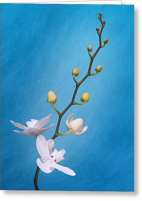White Orchid Buds On Blue Greeting Card by Tom Mc Nemar