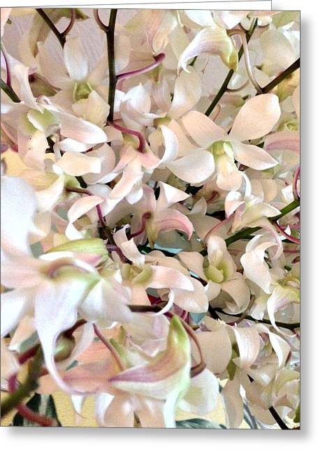 White Orchid Cluster Greeting Card
