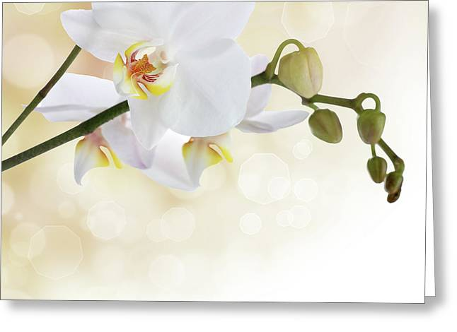 Blooms Mixed Media Greeting Cards - White orchid flower Greeting Card by Pics For Merch