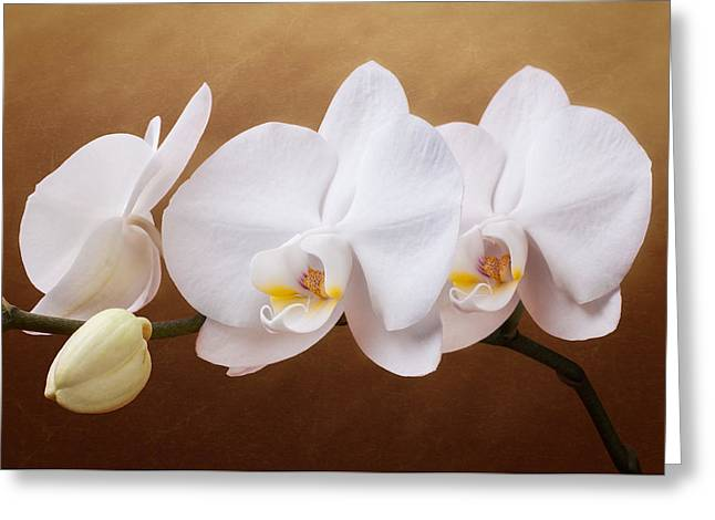 White Orchid Flowers And Bud Greeting Card by Tom Mc Nemar