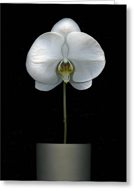 White Orchid In A Pot Greeting Card by Christian Slanec