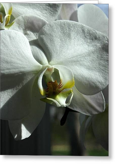 White Orchid In Spring Greeting Card by David Bearden