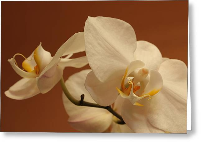 white Orchid Greeting Card by Mario Bennet