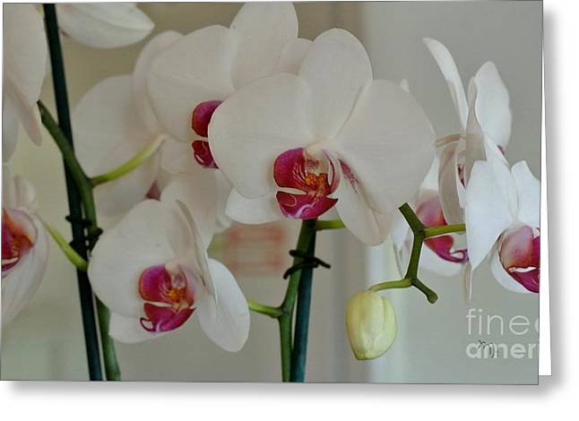 White Orchid Mothers Day Greeting Card by Marsha Heiken