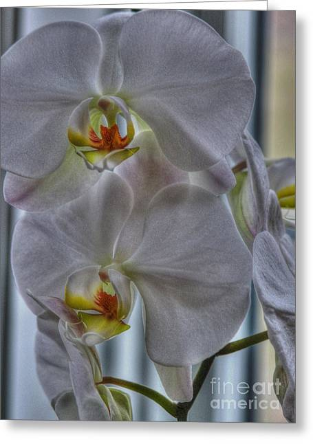 White Orchids Greeting Card by David Bearden