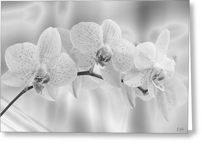 White Orchids Greeting Card by Eric Amsellem