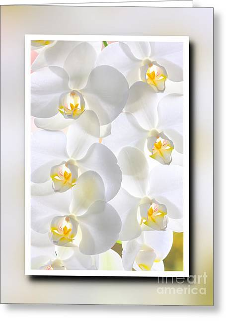 White Orchids Framed Greeting Card