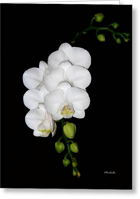 White Orchids On Black Greeting Card