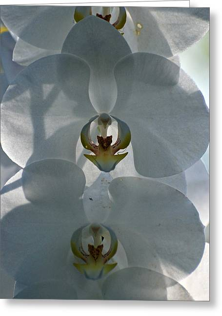 Greeting Card featuring the photograph White Orchids  by Teresa Blanton