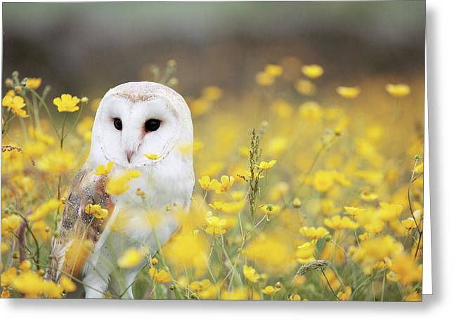 White Owl Greeting Card by Happy Home Artistry
