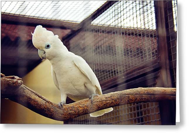 White Parrot  Greeting Card by Svetlana Yelkovan