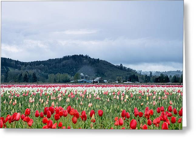 White Pass Highway With Tulips Greeting Card
