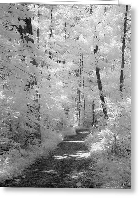 White Path Greeting Card