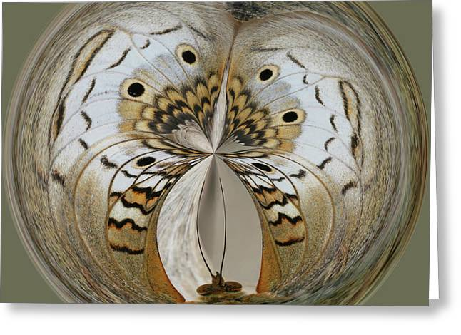 White Peacock Butterfly Orb Greeting Card