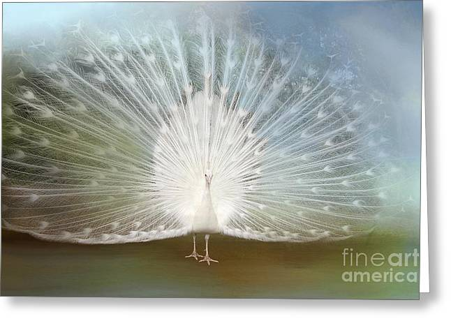 Greeting Card featuring the photograph White Peacock In All His Glory by Bonnie Barry