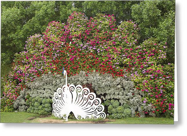 White Peacock Greeting Card by Art Spectrum