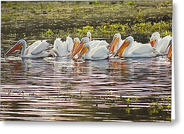 White Pelican Parade Greeting Card