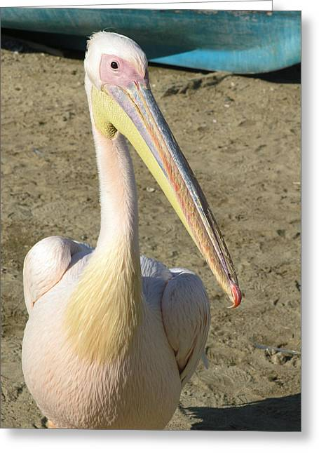 Greeting Card featuring the photograph White Pelican by Sally Weigand
