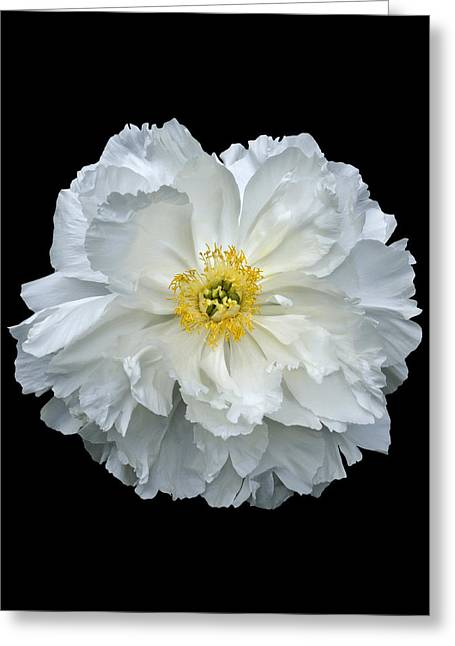 White Peony Greeting Card