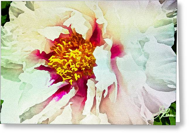 White Peony Greeting Card by Joan Reese