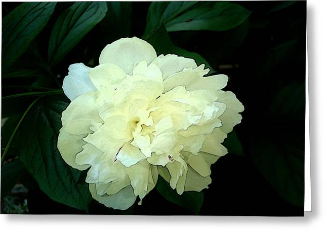 Greeting Card featuring the photograph White Peony Rose Sumie Print by Margie Avellino