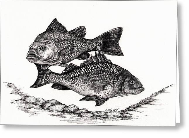 White Perch Greeting Card by Kathleen Kelly Thompson