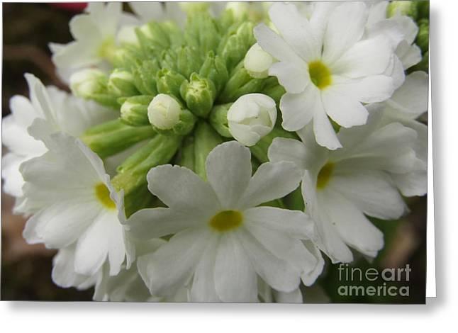 White Petals #1 Greeting Card