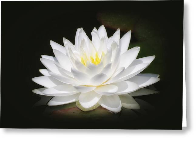White Petals Glow - Water Lily Greeting Card