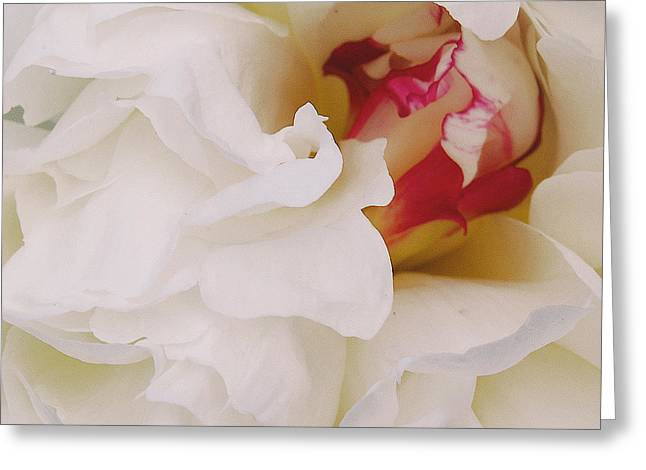 White Petals Greeting Card by Michael Peychich