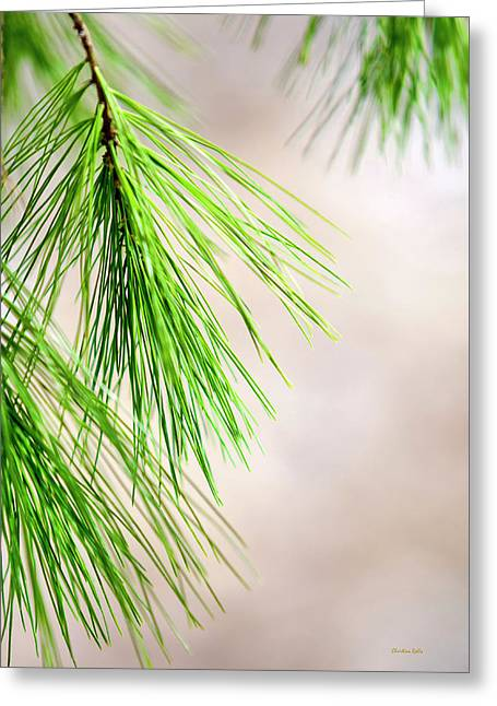 White Pine Branch Greeting Card by Christina Rollo