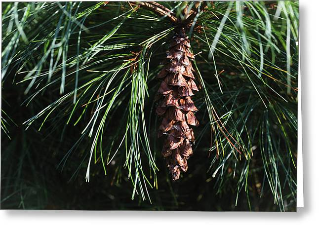 White Pine Cone Greeting Card