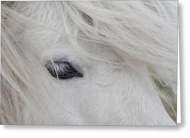 White Pony Greeting Card
