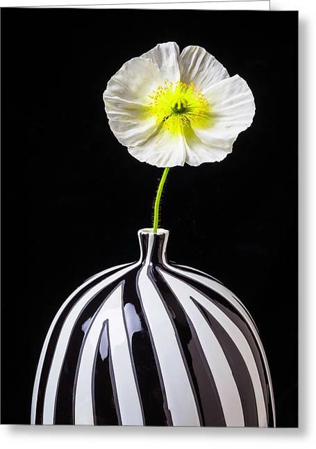 White Poppy In Striped Vase Greeting Card by Garry Gay