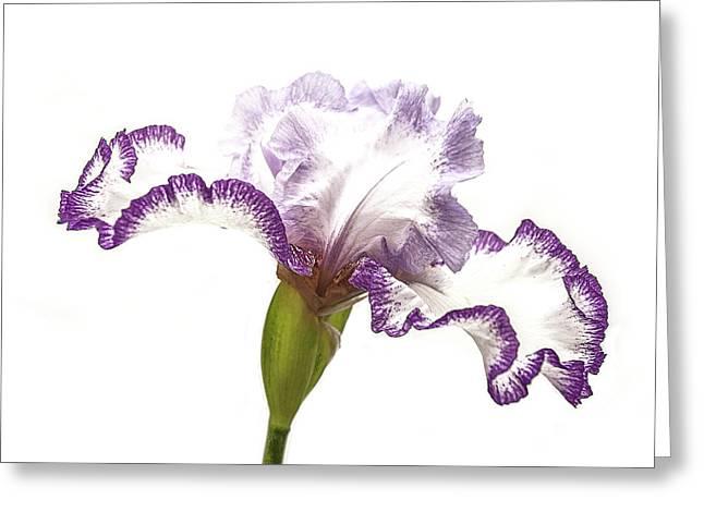 White Purple Iris Greeting Card