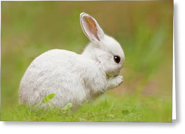 White Rabbit - Cute Overload Greeting Card by Roeselien Raimond