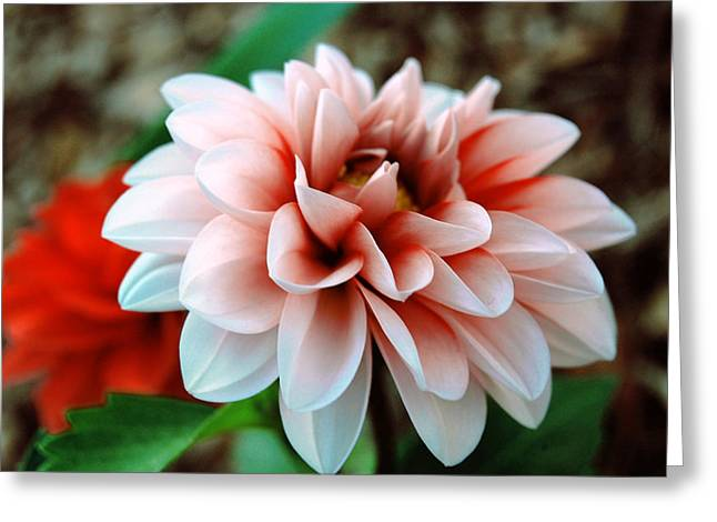 White Red Flower Greeting Card