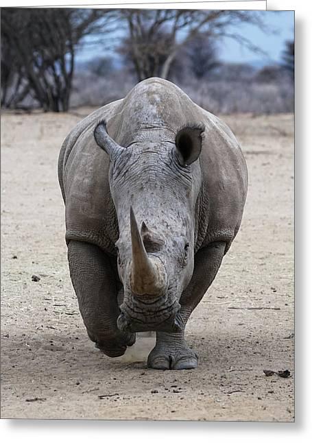 White Rhino 3 Greeting Card by Ernie Echols