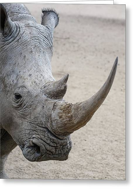 White Rhino 5 Greeting Card