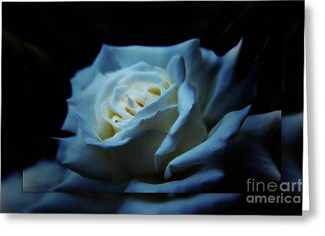 White Rose 2 Greeting Card